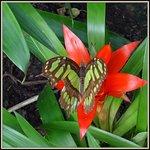 Wundervolle Schmetterlinge bewundert man im Schmetterlingshaus