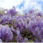 Eine Blütenpracht, die in den Himmel ragt