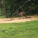 Zoo Basel Foto