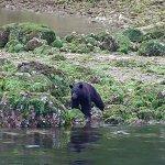 Photo of West Coast Aquatic Safaris