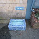 Dog bar outside