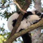 Monkeyland Primate Sanctuary Foto