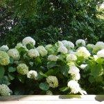 Foto de Thyme Again Gardens