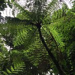 Large Ferns