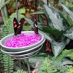 Spring 'Butterflies are Blooming' exhibit