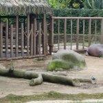 El área de los Hipopotamos