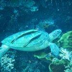 Photo de Froggies Divers Bunaken