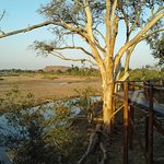 Limpopo river and the tree board walk, great for bird watching