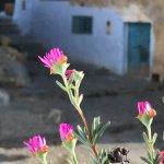 Photo de Dar Dalia