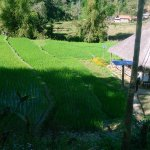 View of rice field at Khmu lodge