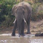 Photo de Pestana Kruger Lodge
