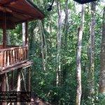 Foto de The RainForest Lodge