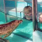 Harbor Seal Exhibit
