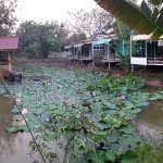 Photo de At Home Sukhothai