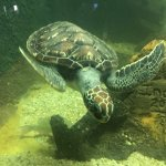 Photo of Aquario Natal
