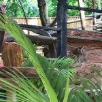 Photo of Seaview Elephant Camp