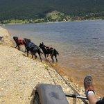 Lac de Matemale - chien de traineau