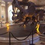 Great Dinosaur Exhibits