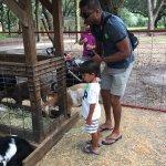 Photo of Green Meadows Petting Farm