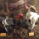 A replica of some acient dinosaurs