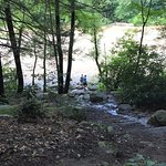 Ferncliff Hike