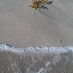Sandy Bay Beach July 2017