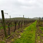 Each area of the vineyard is well labeled so you know what vines/grapes you are viewing.