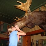 Kiss the Moose in Traverse City Sleder's Family Tavern