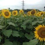 Photo of Narita Yume Farm