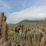 Foto de Punta Choros