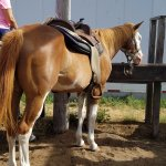 My horse Cowgirl