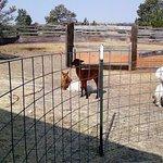 Mule Train Alpaca Ranch