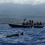 pygmy whales