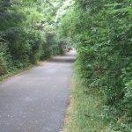 Cape Cod Trail