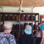 Olive Farm @ Magna Crecia