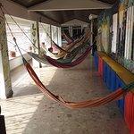 Foto de Drop Bear Hostel