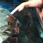 Foto de Aquarium Roquetas de Mar
