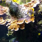 Foto de Oceanopolis