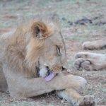 @ Samburu National Reserve