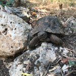 Tortoise on the private beach