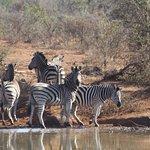 Photo of Amakhosi Safari Lodge