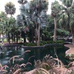 Lake Eola Park Foto
