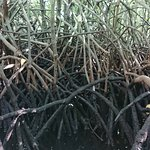 Photo of Mangrove Forest Nusa Lembongan