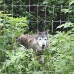 Photo de Wolf Sanctuary of PA