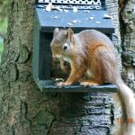 Conservation area for Red Squirrels. Hotel feeds them everyday.