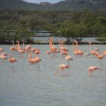 Photo de Flamingo Sanctuary Sint Willibrordus