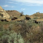 Foto de Theodore Roosevelt National Park