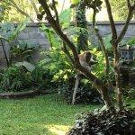 Photo de Garden View Cottage