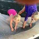 Catching minnows. We even found some teeny tiny jellyfish.