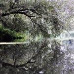 still no beavers :-( but amazing reflections